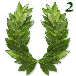 a laurel wreath with a squared symbol